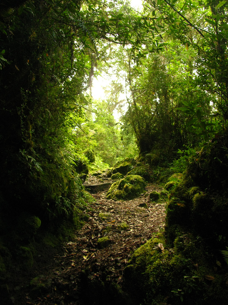 Trekking around the Llanquihue National Reserve Chile