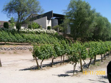 Casablanca vineyard