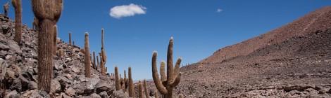 Cactus at Guatin route