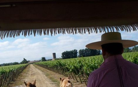 Viu Manent Vineyard Horse Cart visit Chile