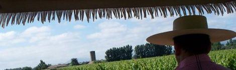 Viu Manent Vineyard Horse Cart visit Chile