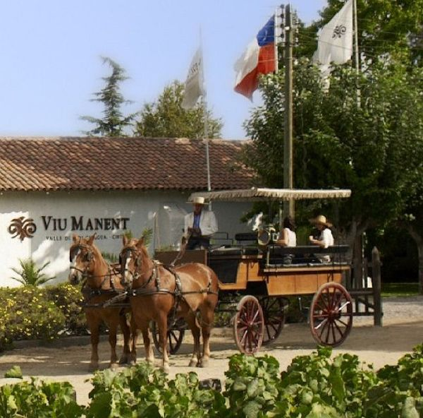 Viu Manent Vineyard horse cart ride Chile