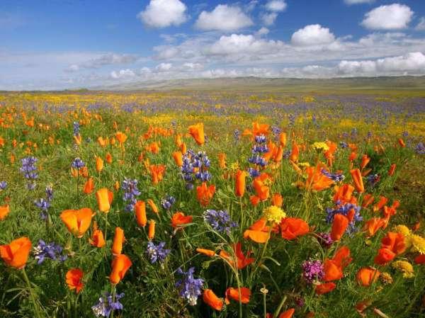 Flower Atacama Desert
