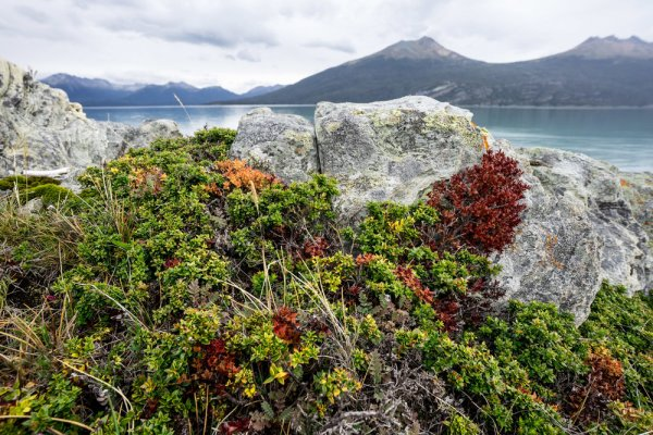Yendegaia+Bay,+Tierra+del+Fuego